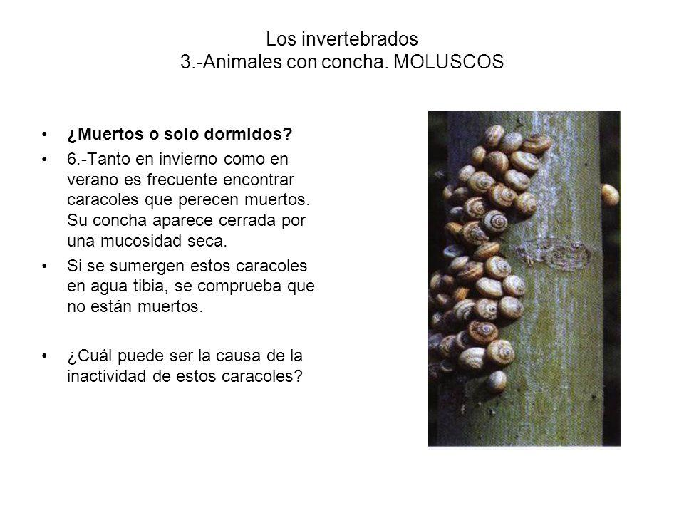 Los invertebrados 3.-Animales con concha.MOLUSCOS ¿Muertos o solo dormidos.