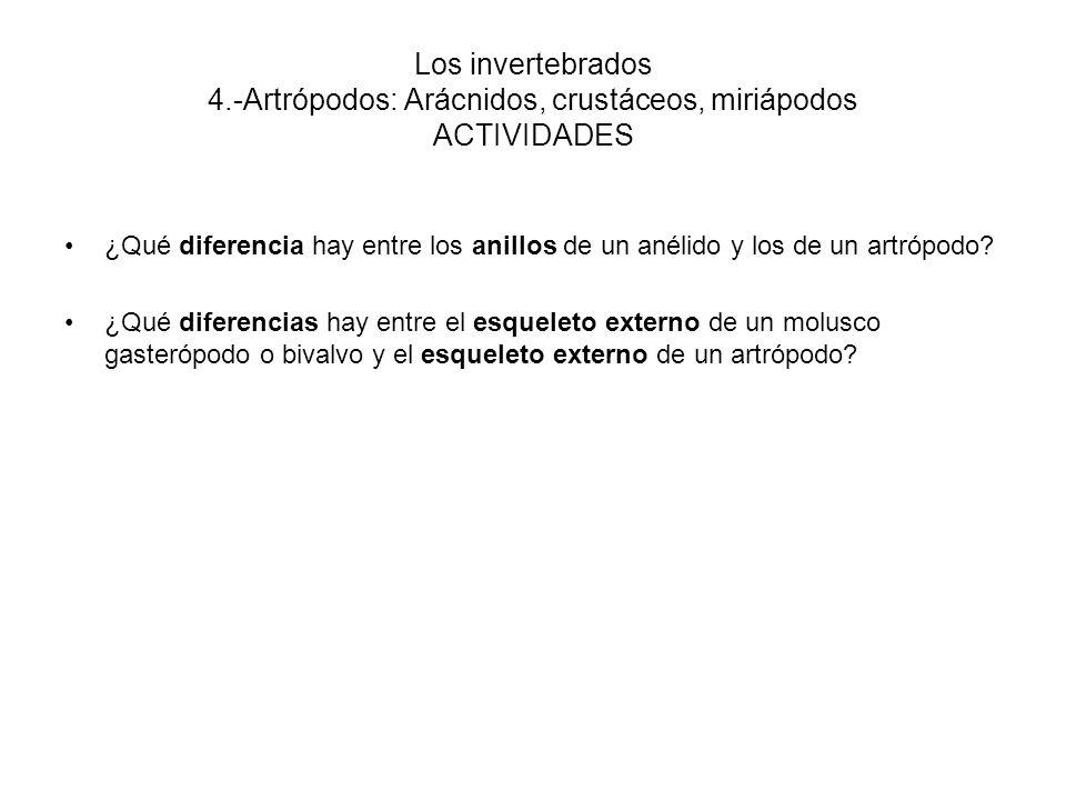 Los invertebrados 4.-Artrópodos: Arácnidos, crustáceos, miriápodos ACTIVIDADES ¿Qué diferencia hay entre los anillos de un anélido y los de un artrópodo.