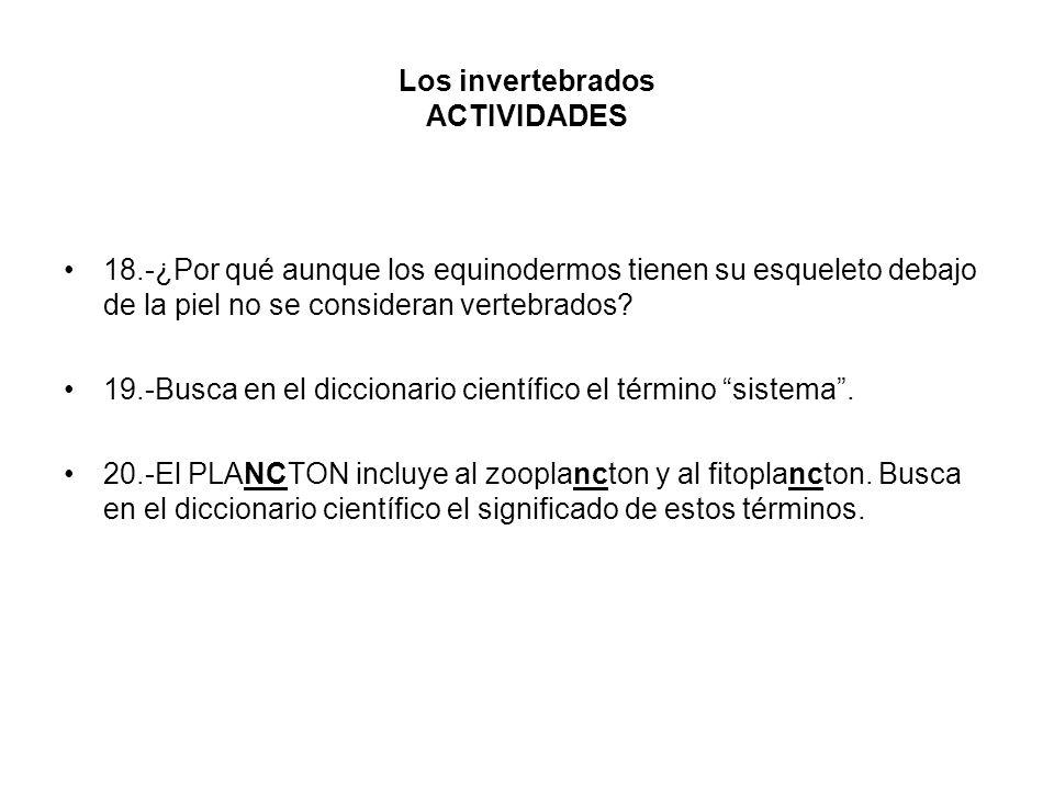 Los invertebrados ACTIVIDADES 18.-¿Por qué aunque los equinodermos tienen su esqueleto debajo de la piel no se consideran vertebrados? 19.-Busca en el