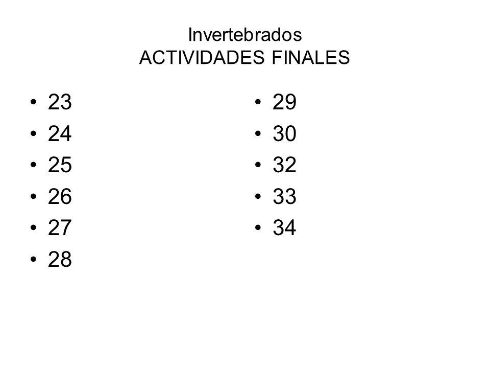 Invertebrados ACTIVIDADES FINALES 23 24 25 26 27 28 29 30 32 33 34