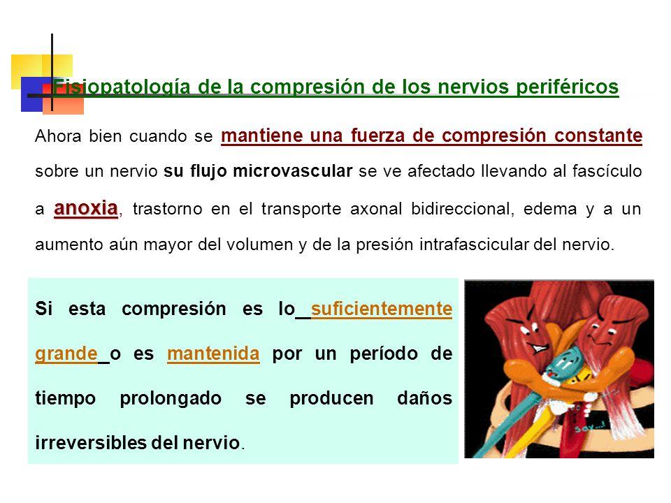 Nervios perifericos Los nervios periféricos están sujetos a una multitud de lesiones, dentro de las cuales las más frecuentes son los denominados sínd