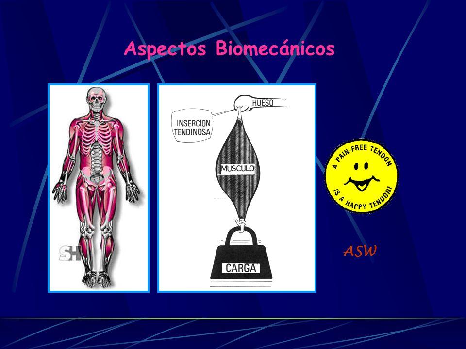 Componentes Elementos anatómicos Elementos mecánicos Partes osteoarticulares Huesos Articulaciones Palancas Charnelas Partes blandas Músculos Tendones Ligamentos Motores Cables Refuerzos Aspectos Biomecánicos ASW