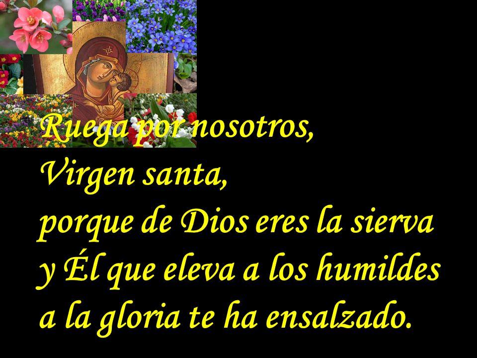 . Ruega por nosotros, Virgen santa, porque de Dios eres la sierva y Él que eleva a los humildes a la gloria te ha ensalzado.