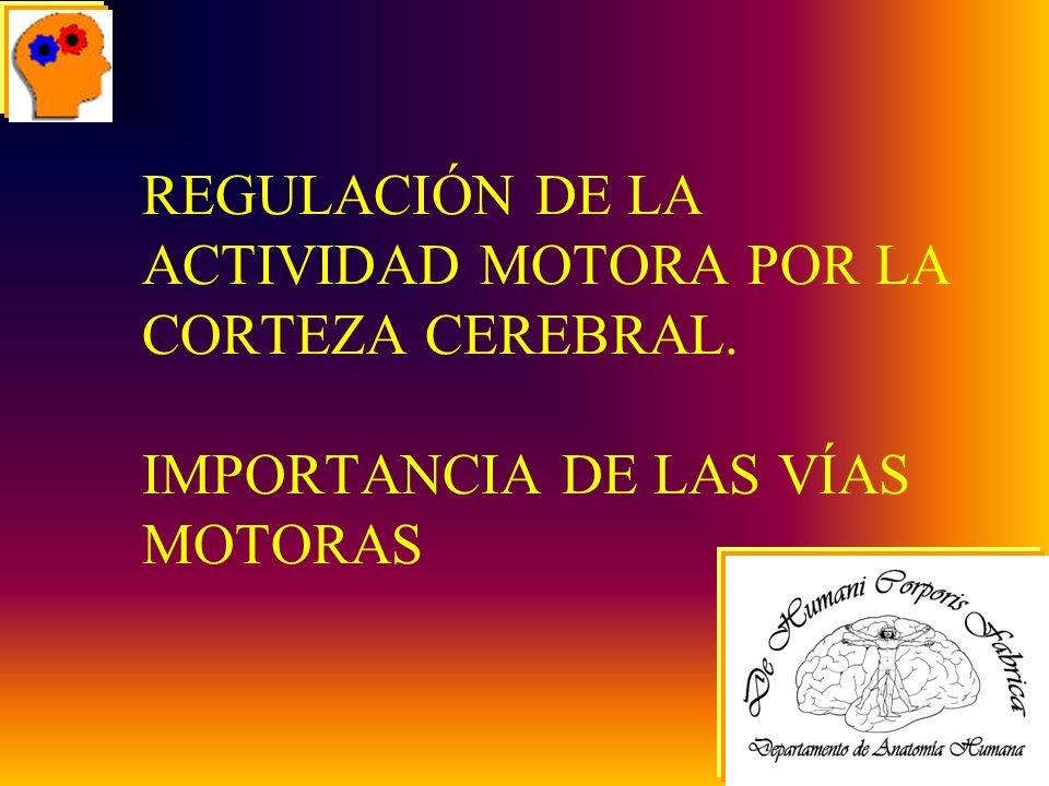 REGULACIÓN DE LA ACTIVIDAD MOTORA POR LA CORTEZA CEREBRAL. IMPORTANCIA DE LAS VÍAS MOTORAS