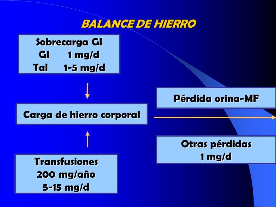 BALANCE DE HIERRO Sobrecarga GI GI 1 mg/d Tal 1-5 mg/d Pérdida orina-MF Carga de hierro corporal Transfusiones 200 mg/año 5-15 mg/d Otras pérdidas 1 m