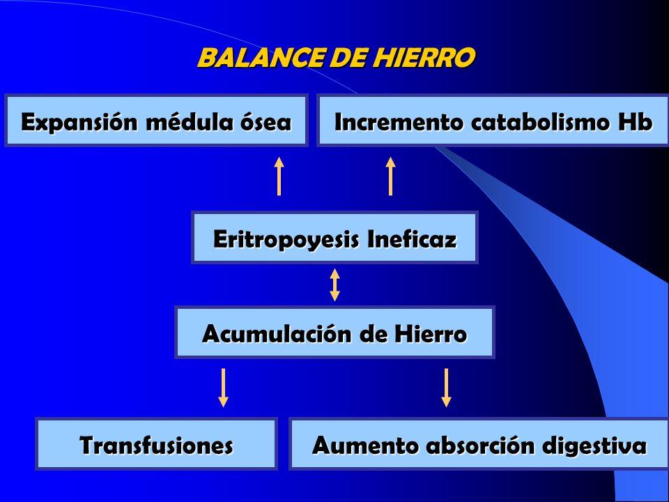 BALANCE DE HIERRO Eritropoyesis Ineficaz Expansión médula ósea Incremento catabolismo Hb Acumulación de Hierro Transfusiones Aumento absorción digesti