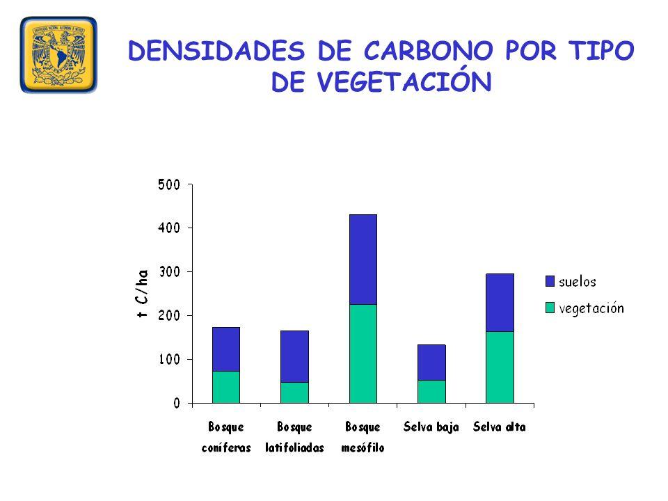 DENSIDADES DE CARBONO POR TIPO DE VEGETACIÓN