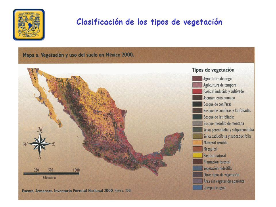Clasificación de los tipos de vegetación