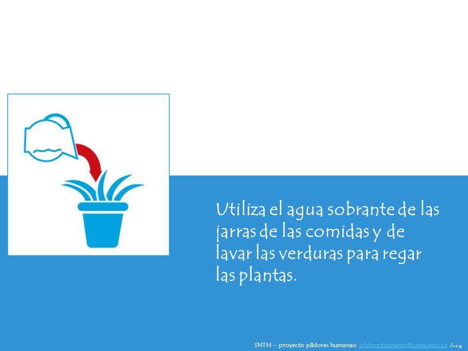 Utiliza el agua sobrante de las jarras de las comidas y de lavar las verduras para regar las plantas.