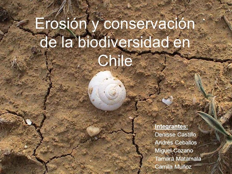 Erosión y conservación de la biodiversidad en Chile Integrantes: Denisse Castillo Andrés Ceballos Miguel Cozano Tamara Matamala Camila Muñoz