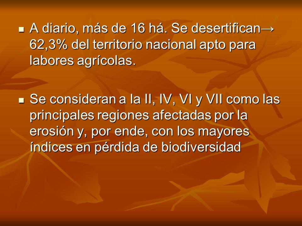 A diario, más de 16 há. Se desertifican 62,3% del territorio nacional apto para labores agrícolas. A diario, más de 16 há. Se desertifican 62,3% del t