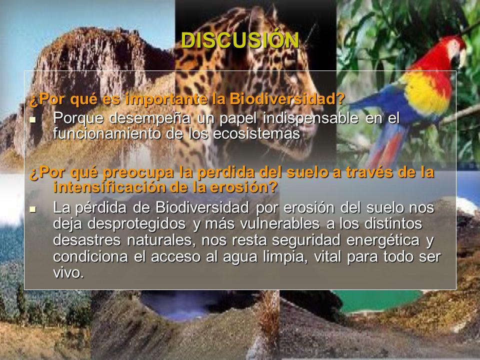 DISCUSIÓN ¿Por qué es importante la Biodiversidad? Porque desempeña un papel indispensable en el funcionamiento de los ecosistemas Porque desempeña un