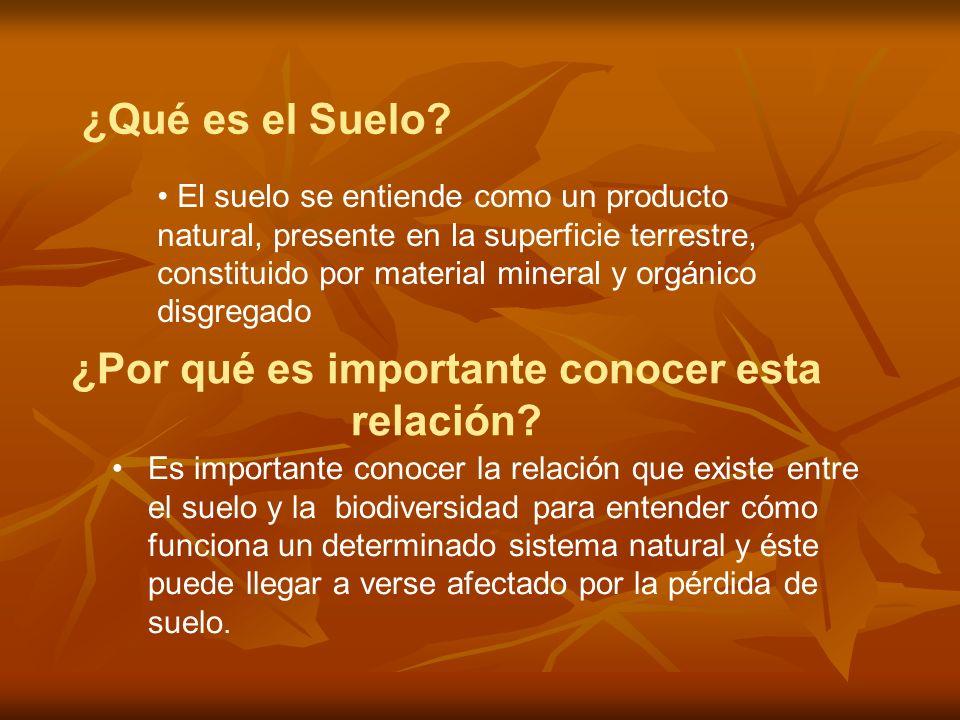 Es importante conocer la relación que existe entre el suelo y la biodiversidad para entender cómo funciona un determinado sistema natural y éste puede