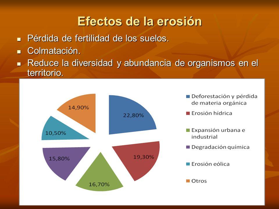 Efectos de la erosión Pérdida de fertilidad de los suelos. Pérdida de fertilidad de los suelos. Colmatación. Colmatación. Reduce la diversidad y abund