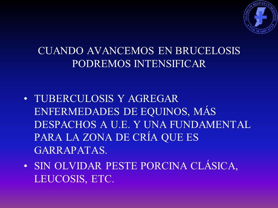 CUANDO AVANCEMOS EN BRUCELOSIS PODREMOS INTENSIFICAR TUBERCULOSIS Y AGREGAR ENFERMEDADES DE EQUINOS, MÁS DESPACHOS A U.E.