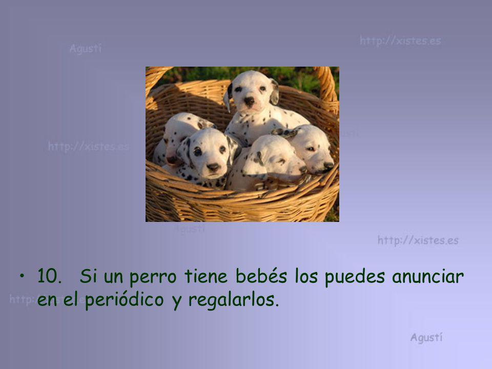 10. Si un perro tiene bebés los puedes anunciar en el periódico y regalarlos.