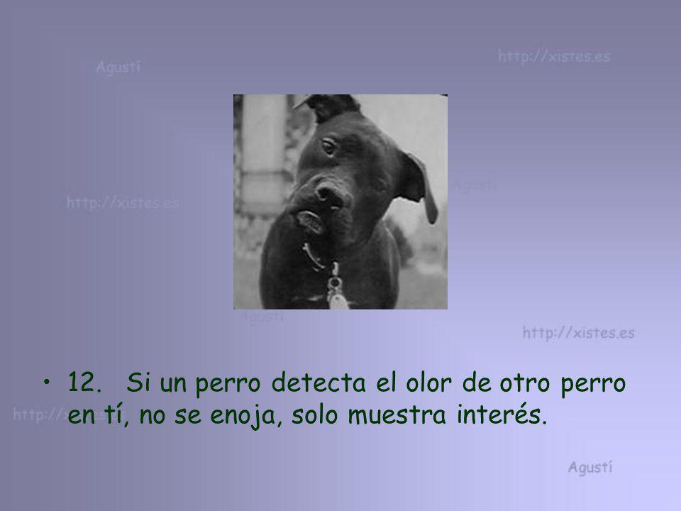 12. Si un perro detecta el olor de otro perro en tí, no se enoja, solo muestra interés.