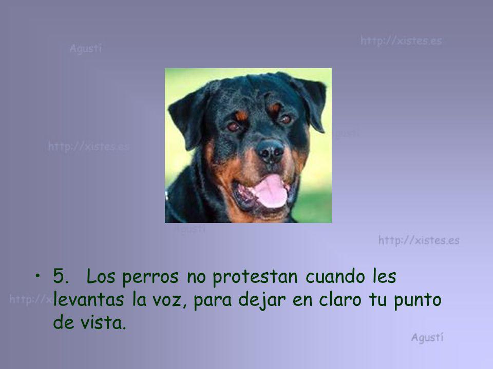 5. Los perros no protestan cuando les levantas la voz, para dejar en claro tu punto de vista.