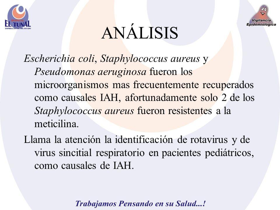 ANÁLISIS Escherichia coli, Staphylococcus aureus y Pseudomonas aeruginosa fueron los microorganismos mas frecuentemente recuperados como causales IAH,