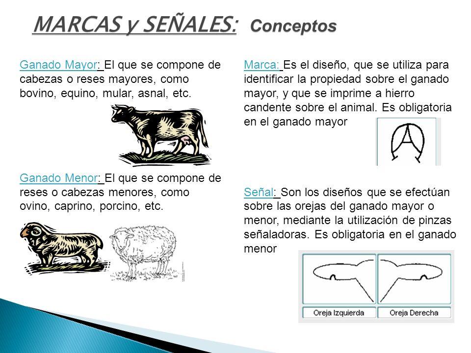 MARCAS y SEÑALES: Conceptos Ganado Mayor: El que se compone de cabezas o reses mayores, como bovino, equino, mular, asnal, etc. Ganado Menor: El que s