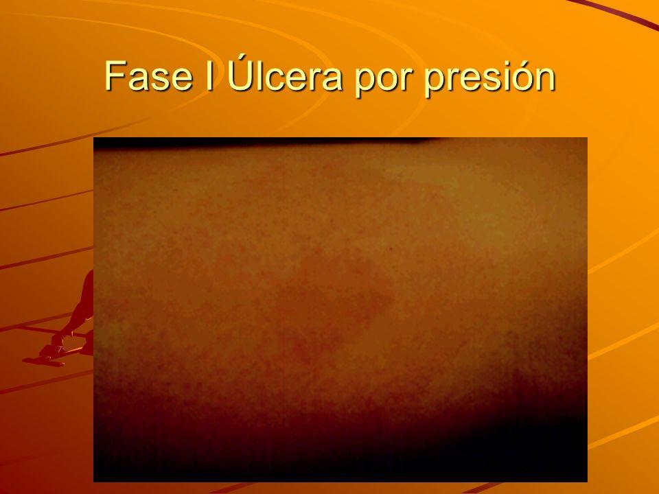 La piel Órgano más grande del cuerpo humano.Protege a los músculos y a los órganos internos.