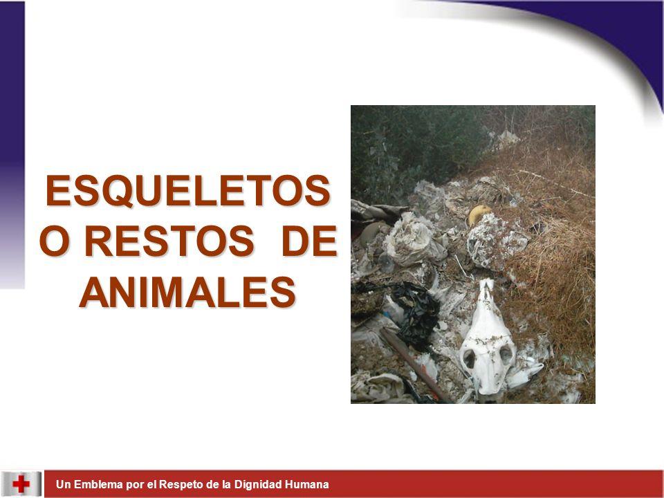 Un Emblema por el Respeto de la Dignidad Humana ESQUELETOS O RESTOS DE ANIMALES