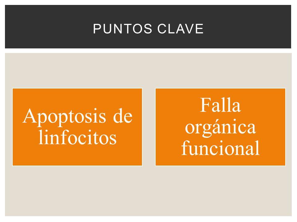 Apoptosis de linfocitos Falla orgánica funcional PUNTOS CLAVE