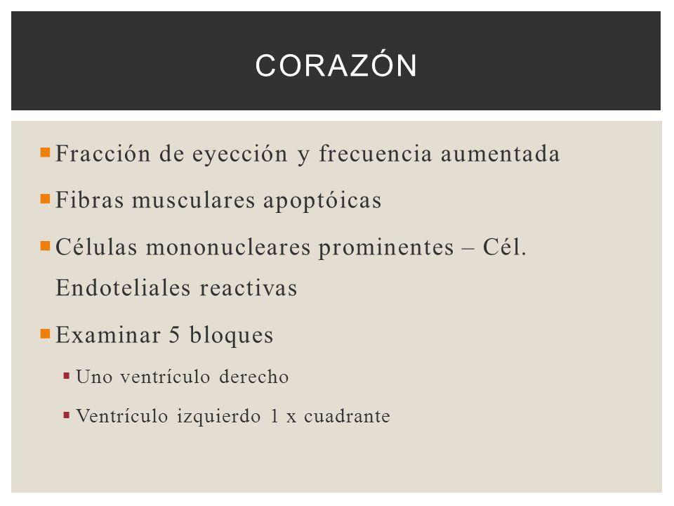 Fracción de eyección y frecuencia aumentada Fibras musculares apoptóicas Células mononucleares prominentes – Cél. Endoteliales reactivas Examinar 5 bl