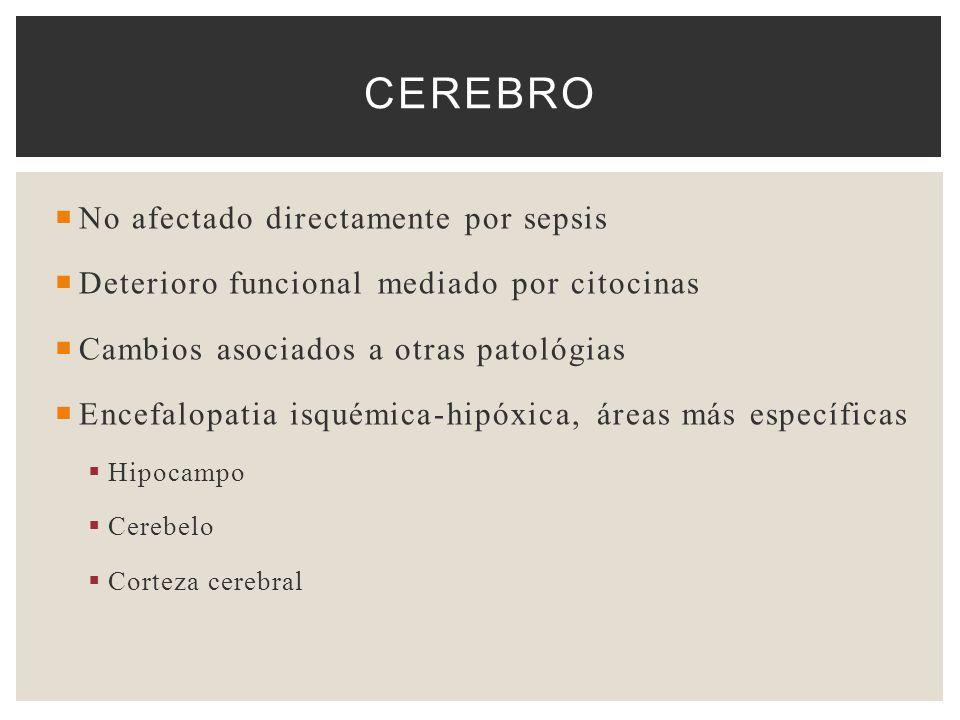 No afectado directamente por sepsis Deterioro funcional mediado por citocinas Cambios asociados a otras patológias Encefalopatia isquémica-hipóxica, á