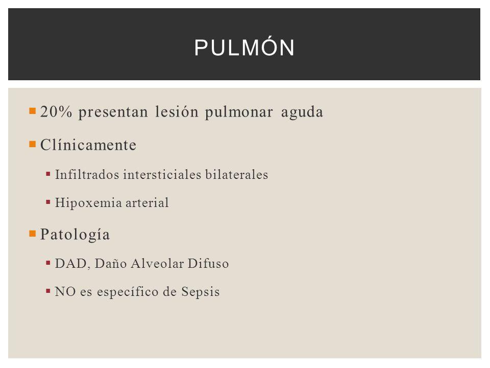 20% presentan lesión pulmonar aguda Clínicamente Infiltrados intersticiales bilaterales Hipoxemia arterial Patología DAD, Daño Alveolar Difuso NO es e