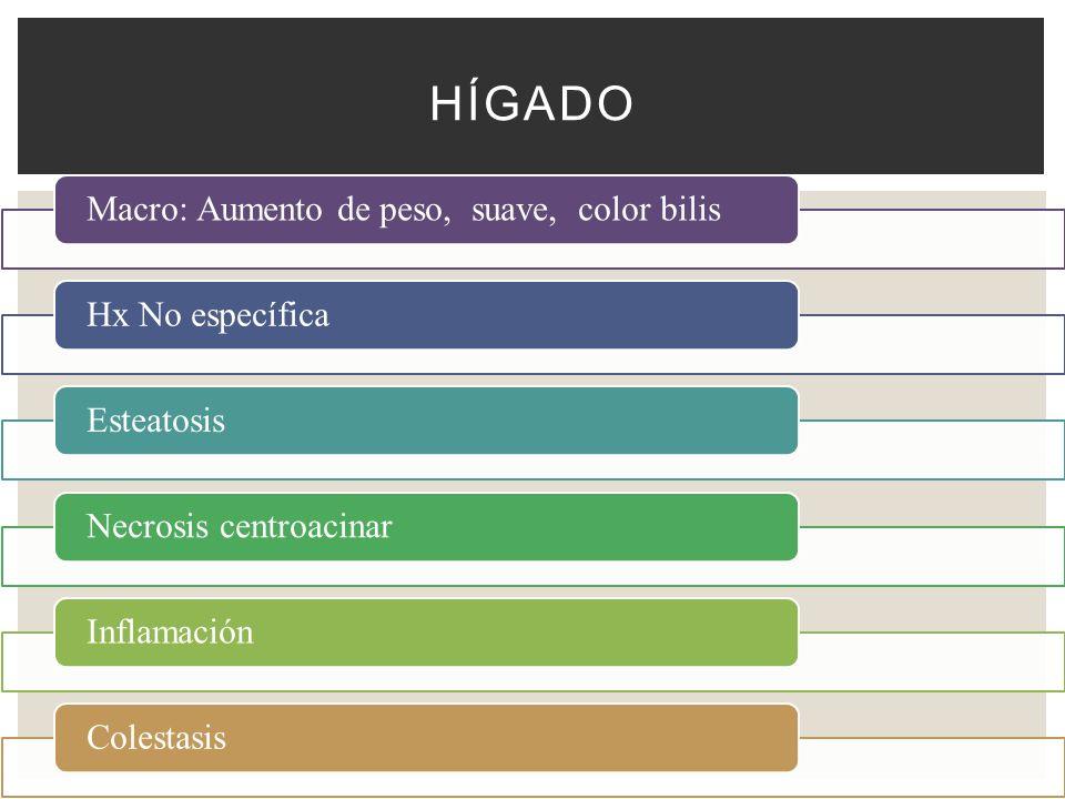 Macro: Aumento de peso, suave, color bilisHx No específicaEsteatosisNecrosis centroacinarInflamaciónColestasis HÍGADO