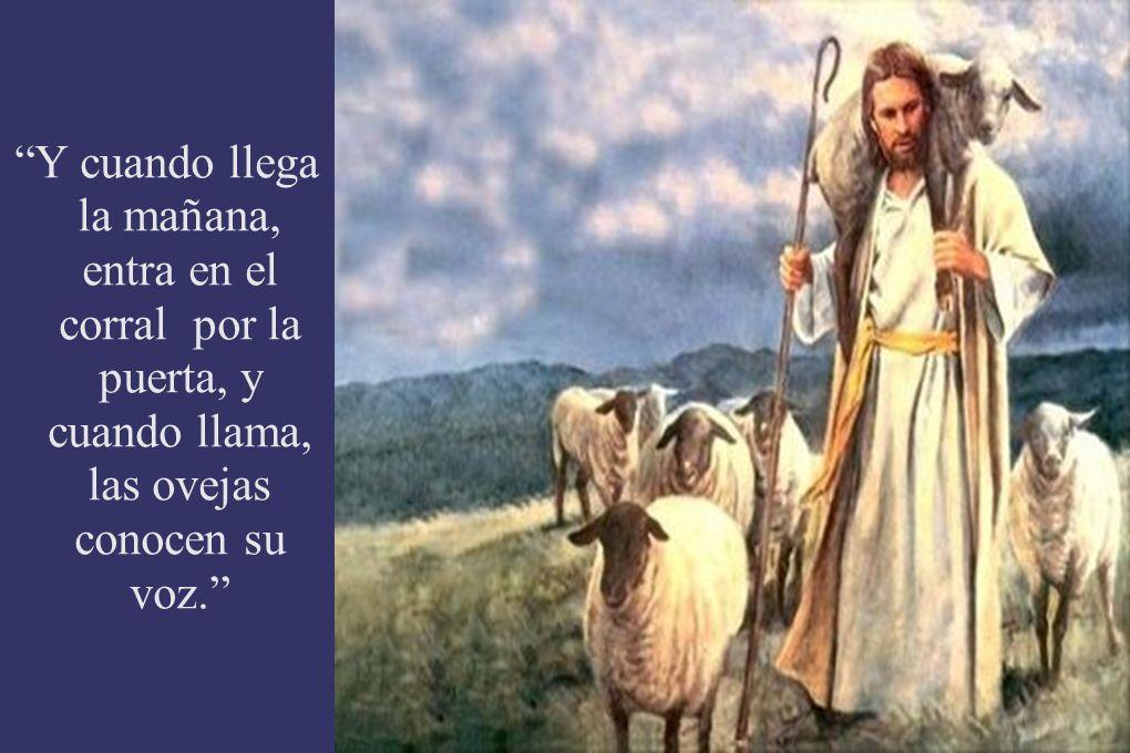Y cuando llega la mañana, entra en el corral por la puerta, y cuando llama, las ovejas conocen su voz.