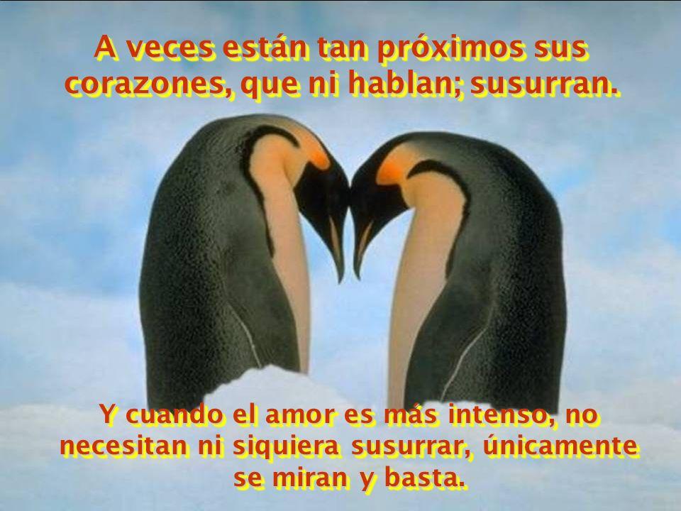 Nunca gritan. Hablan suavemente. ¿Por que? Porque sus corazones están cerca uno del otro. La distancia entre ellos es pequeña.