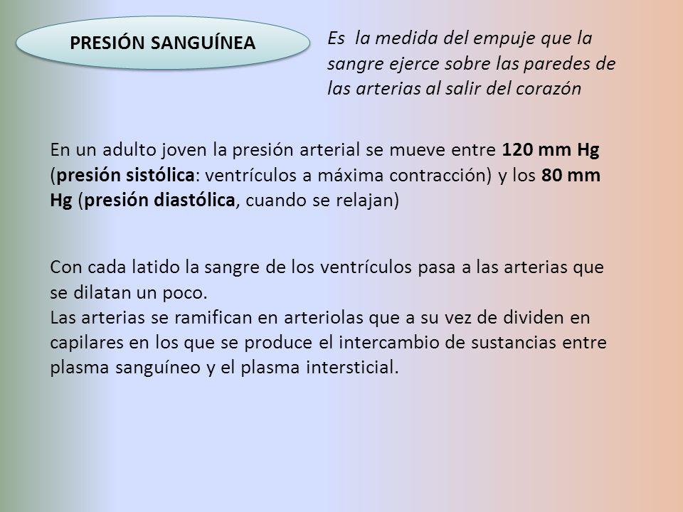 PRESIÓN SANGUÍNEA En un adulto joven la presión arterial se mueve entre 120 mm Hg (presión sistólica: ventrículos a máxima contracción) y los 80 mm Hg