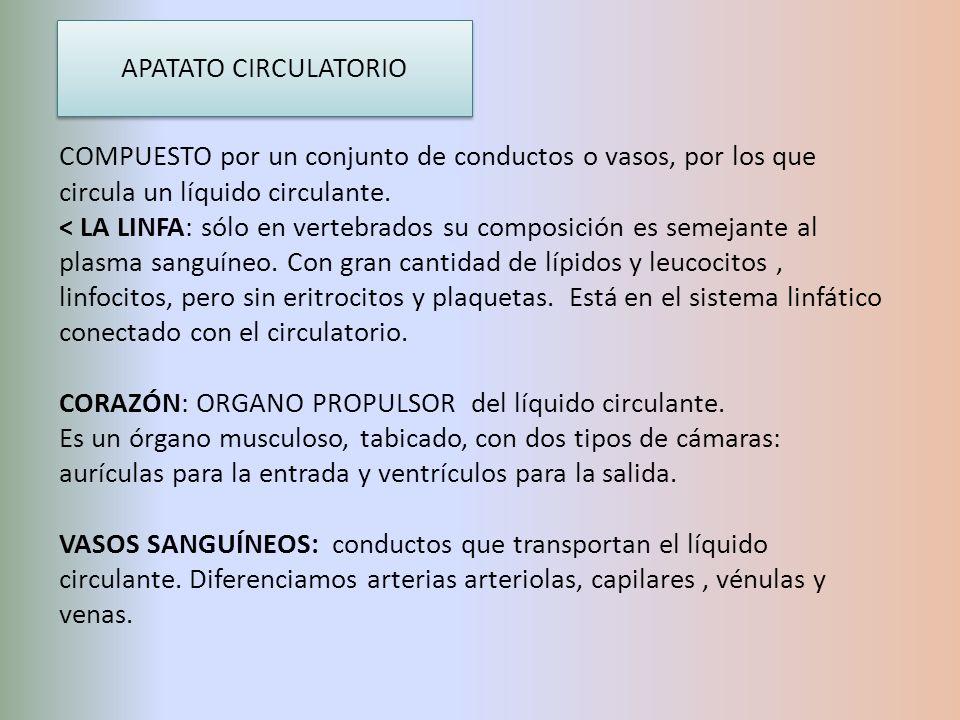 APATATO CIRCULATORIO COMPUESTO por un conjunto de conductos o vasos, por los que circula un líquido circulante. < LA LINFA: sólo en vertebrados su com