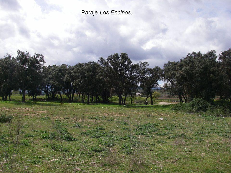 Vista de Entrena Alfonso I el Católico Alfonso I el Católico a mediados del siglo VIII reconquistó la villa a los musulmanes.
