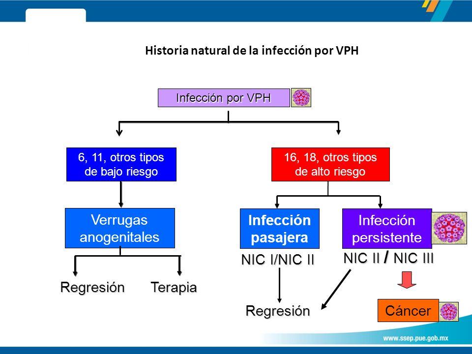 Historia natural de la infección por VPH Infección por VPH 6, 11, otros tipos de bajo riesgo 16, 18, otros tipos de alto riesgo Verrugas anogenitales Infección pasajera Infección persistente RegresiónTerapia NIC I/NIC II NIC II / NIC III Regresión Cáncer