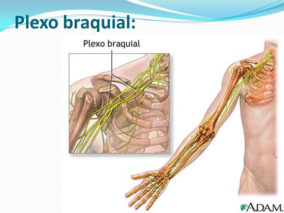 Plexo braquial:
