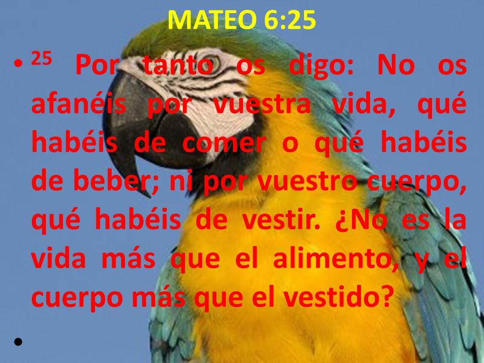 MATEO 6:25 25 Por tanto os digo: No os afanéis por vuestra vida, qué habéis de comer o qué habéis de beber; ni por vuestro cuerpo, qué habéis de vesti