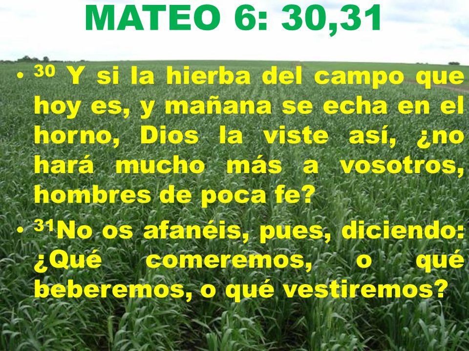 MATEO 6: 30,31 30 Y si la hierba del campo que hoy es, y mañana se echa en el horno, Dios la viste así, ¿no hará mucho más a vosotros, hombres de poca