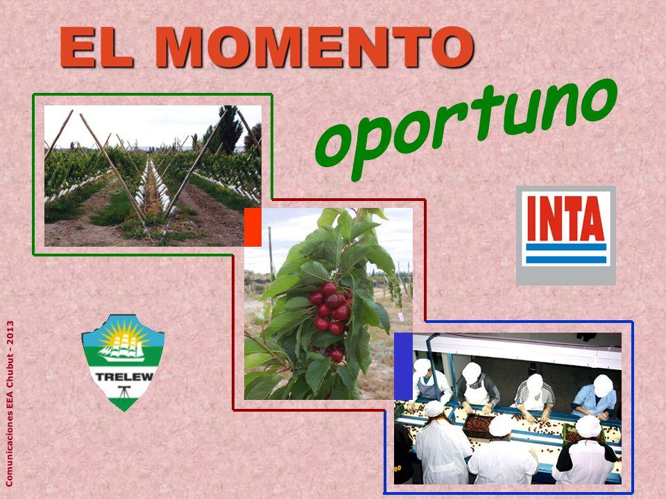EL MOMENTO oportuno Comunicaciones EEA Chubut - 2013