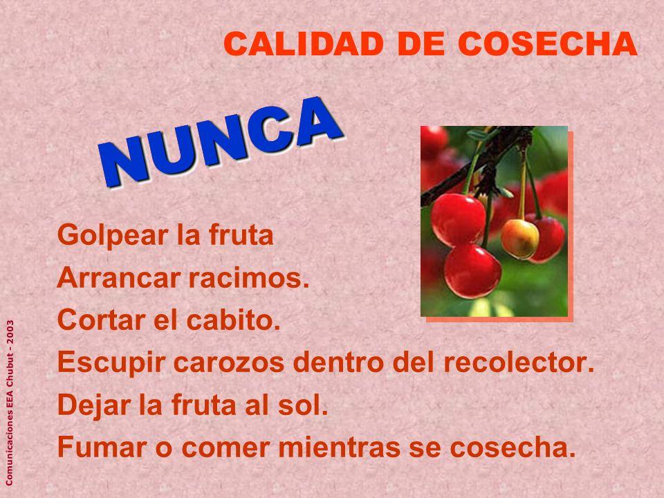 Golpear la fruta Arrancar racimos. Cortar el cabito. Escupir carozos dentro del recolector. Dejar la fruta al sol. Fumar o comer mientras se cosecha.