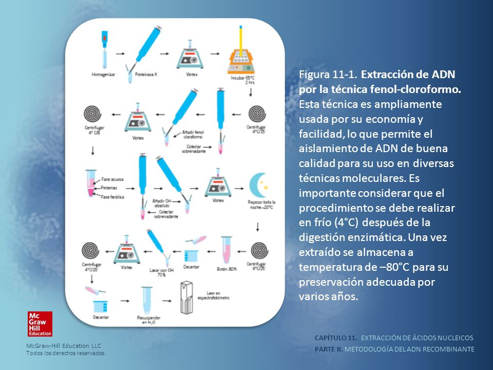 PARTE II. METODOLOGÍA DEL ADN RECOMBINANTE CAPÍTULO 11. EXTRACCIÓN DE ÁCIDOS NUCLEICOS Figura 11-1. Extracción de ADN por la técnica fenol-cloroformo.