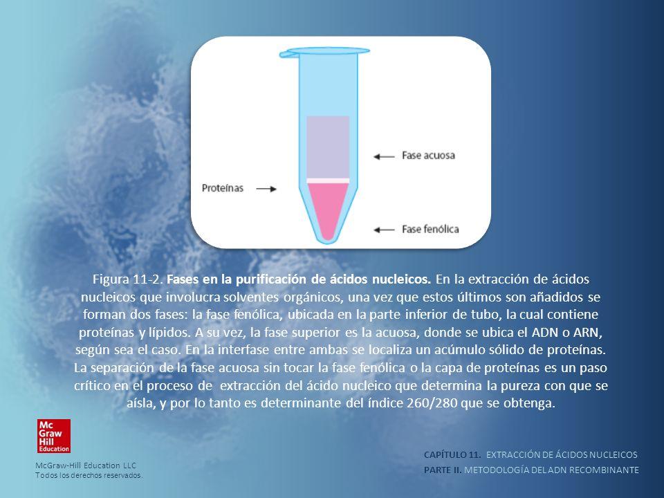 PARTE II. METODOLOGÍA DEL ADN RECOMBINANTE CAPÍTULO 11. EXTRACCIÓN DE ÁCIDOS NUCLEICOS Figura 11-2. Fases en la purificación de ácidos nucleicos. En l