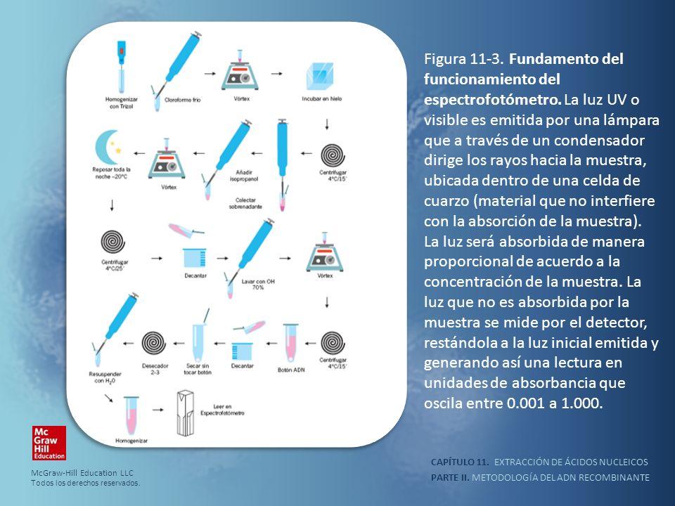 PARTE II. METODOLOGÍA DEL ADN RECOMBINANTE CAPÍTULO 11. EXTRACCIÓN DE ÁCIDOS NUCLEICOS Figura 11-3. Fundamento del funcionamiento del espectrofotómetr