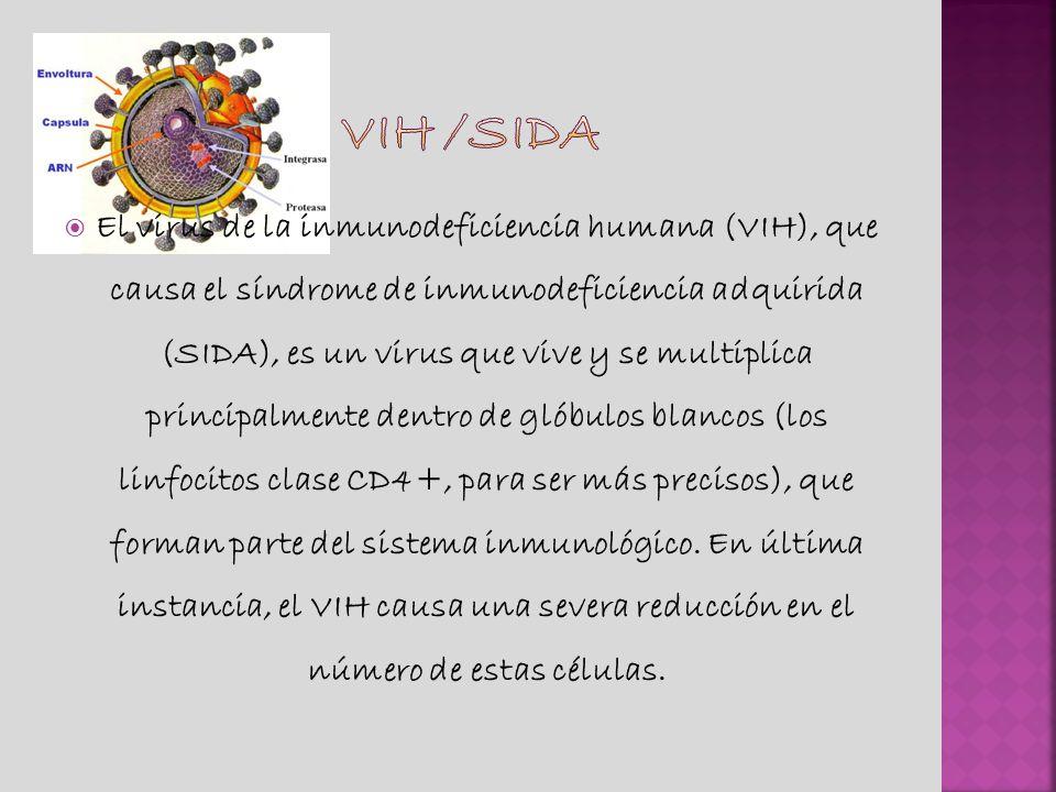 El virus de la inmunodeficiencia humana (VIH), que causa el síndrome de inmunodeficiencia adquirida (SIDA), es un virus que vive y se multiplica principalmente dentro de glóbulos blancos (los linfocitos clase CD4+, para ser más precisos), que forman parte del sistema inmunológico.