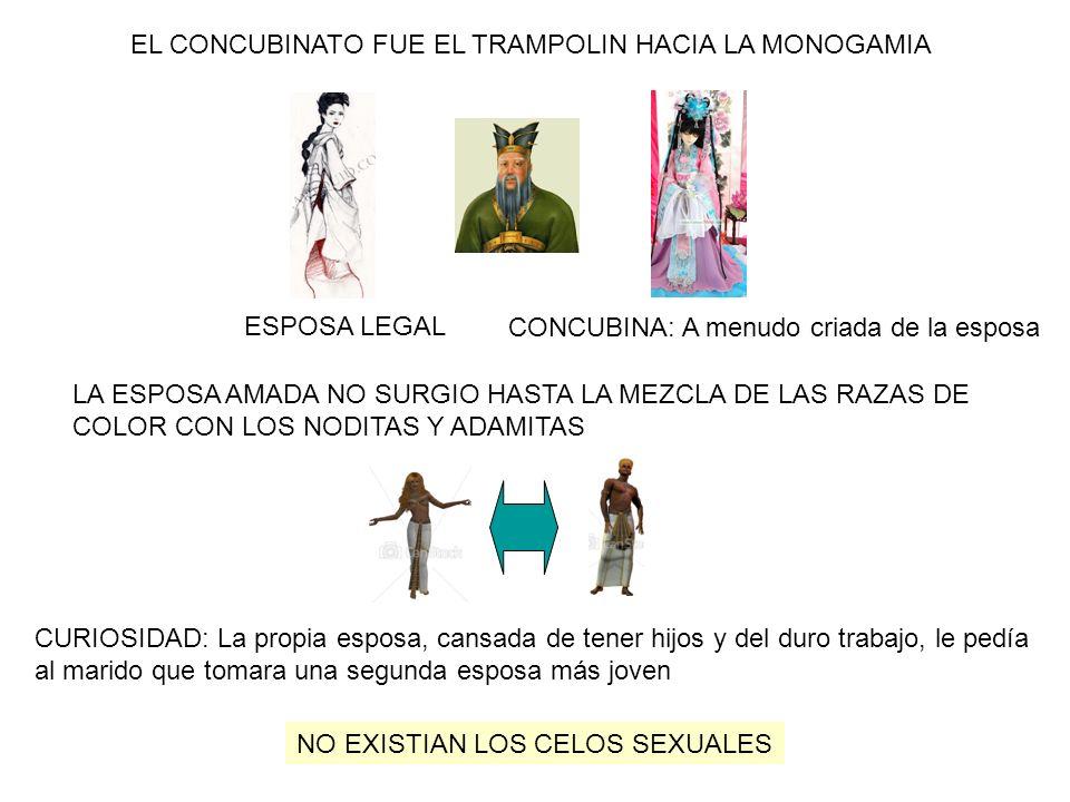 LA ESPOSA AMADA NO SURGIO HASTA LA MEZCLA DE LAS RAZAS DE COLOR CON LOS NODITAS Y ADAMITAS EL CONCUBINATO FUE EL TRAMPOLIN HACIA LA MONOGAMIA CONCUBIN