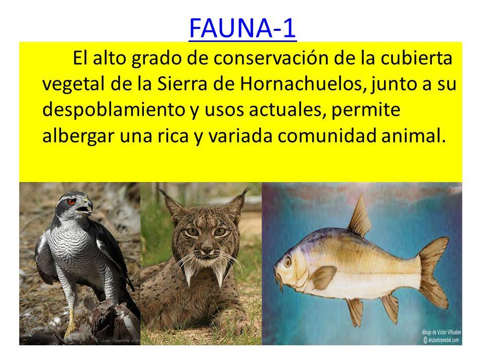 FAUNA-1 El alto grado de conservación de la cubierta vegetal de la Sierra de Hornachuelos, junto a su despoblamiento y usos actuales, permite albergar
