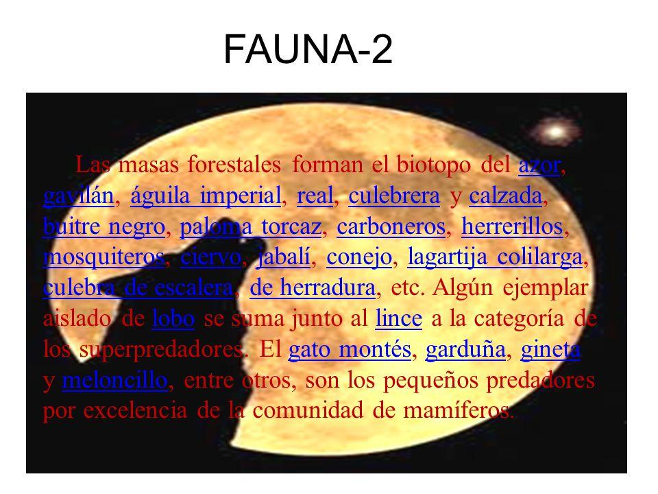 Las masas forestales forman el biotopo del azor, gavilán, águila imperial, real, culebrera y calzada, buitre negro, paloma torcaz, carboneros, herreri