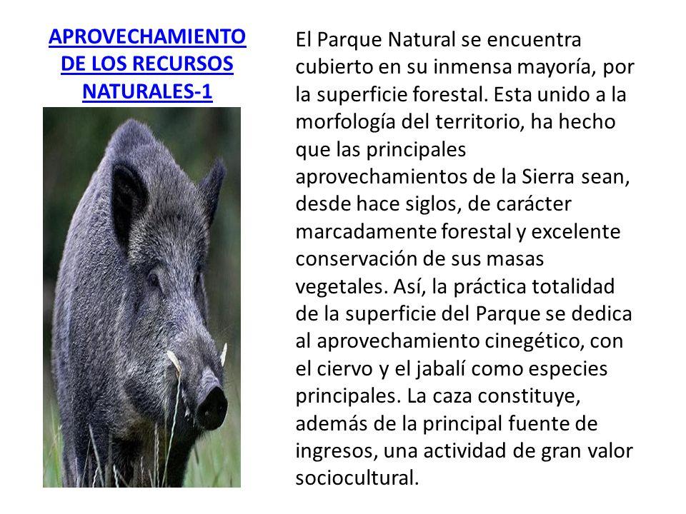 APROVECHAMIENTO DE LOS RECURSOS NATURALES-1 El Parque Natural se encuentra cubierto en su inmensa mayoría, por la superficie forestal. Esta unido a la